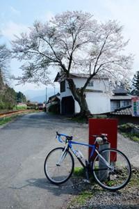 南阿蘇鉄道・加勢駅の西踏切近くの桜